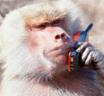 Monkey phone