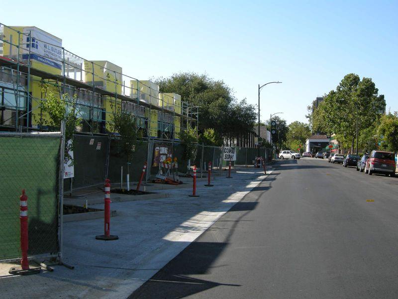 Street trees_Primrose
