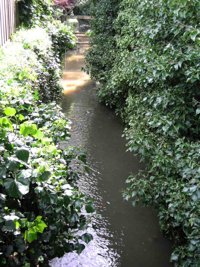 Running Creek2