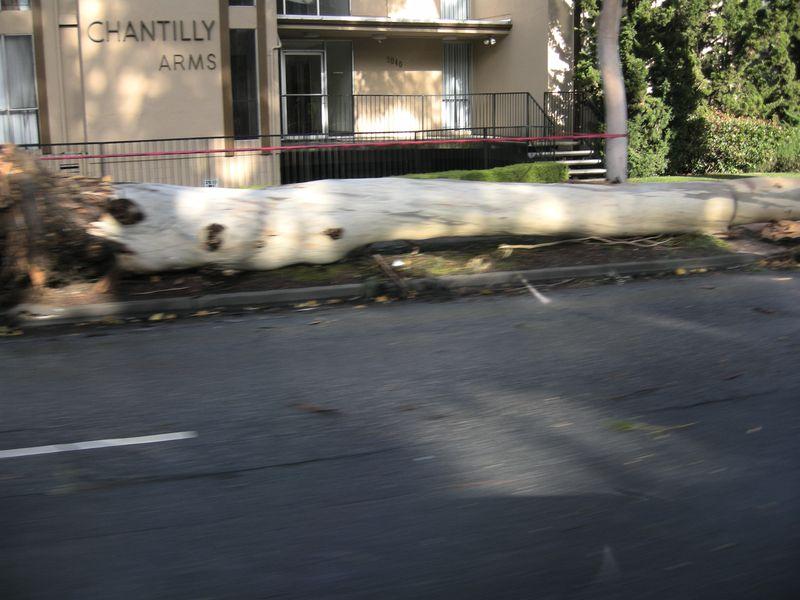 Euc casualty_12_2012