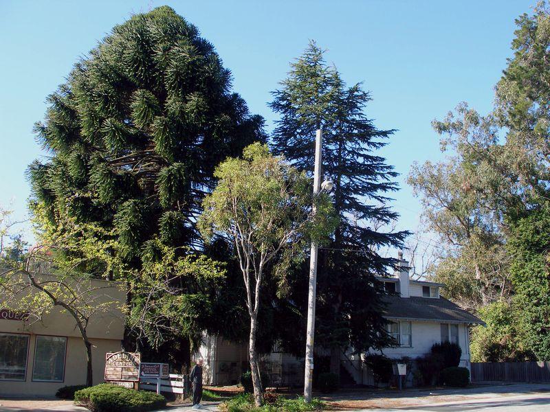 1509 ECR Trees Feb 2013