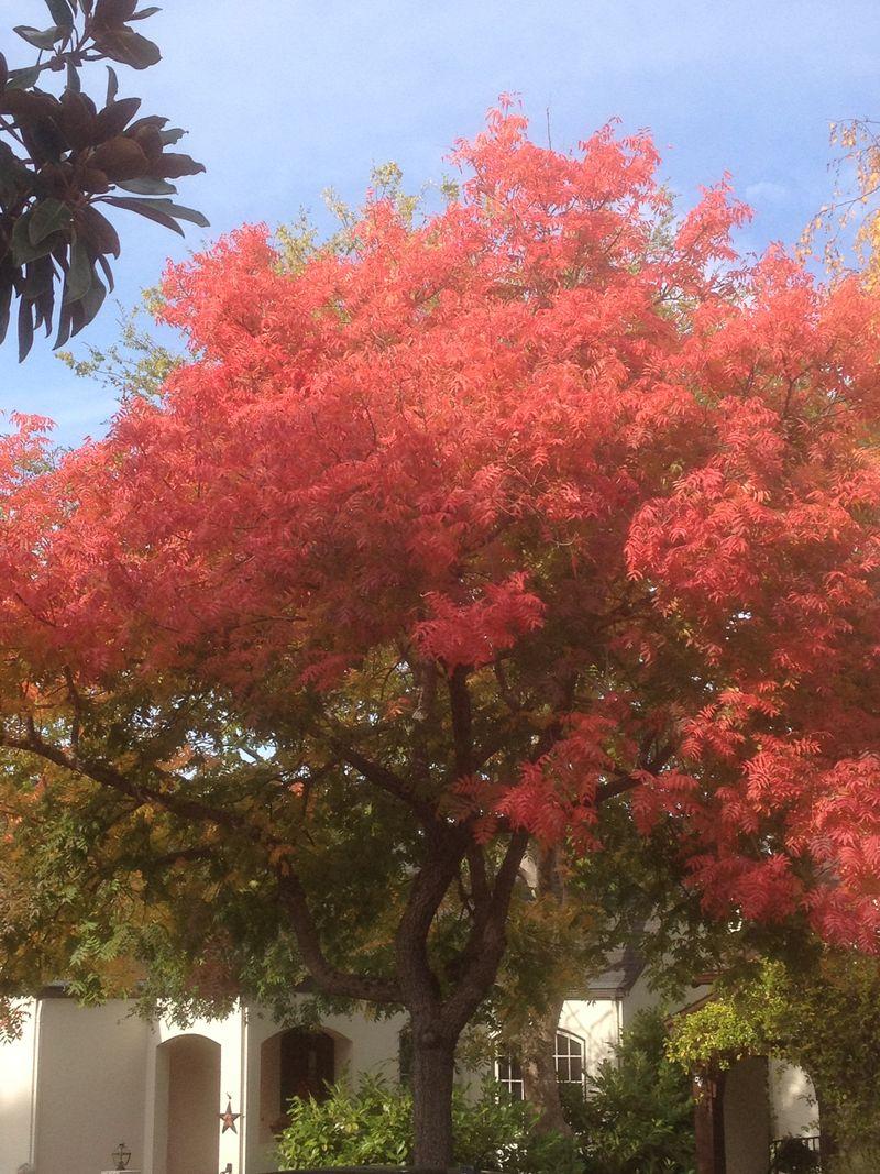 2013 Alvarado red tree