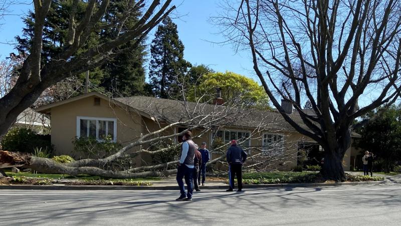 Fallen tree branch1